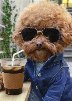 Birthday Greeting Card  - Cool Dog with Coffee