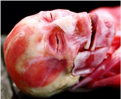 human anatomy face without skin - Yahoo Image Search Results