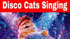 Space Cats - Disco Cats - Dancing Cats Animals And Pets, Funny Animals, Cute Animals, Funny Cat Videos, Funny Cats, Cat Behaviour, Youtube Cats, Dancing Cat, Right Meow