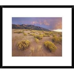 Global Gallery Sagewort on Sand Dune, Sangre De Cristo Mountains, Great Sand Dunes National Monument, Colorado by Tim Fitzharris Framed Photographi...