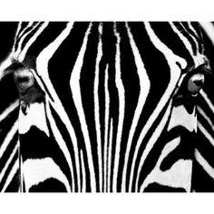 Black & White I (Zebra) Art Poster Print by Rocco Sette, 20x16 (Kitchen) http://www.amazon.com/dp/B002M3LFMU/?tag=wwwmoynulinfo-20 B002M3LFMU