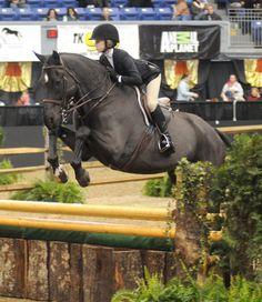 Brianne Goutal's former eq horse