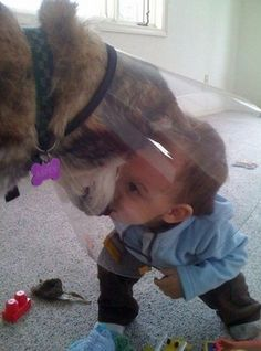 This dog that will embrace the cone of shame to have secret meetings with the tiny human. Cute puppies and adorable kids. Love My Dog, Puppy Love, Baby Animals, Funny Animals, Cute Animals, Animal Pictures, Cute Pictures, Baby Pictures, Funny Puppy Pictures