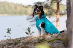 Rukka Raincoats, overalls, fleecewear, and knitwear for dogs Pet Clothes, Doggies, Raincoat, Spring Summer, Pets, Style, Little Puppies, Rain Jacket, Swag