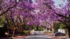 Scenic early morning timelapse in city streets with traffic, blooming Jacaranda trees and people walking to work in the summer, Pretoria, South Africa, 4K 25p. #TLSA #wedoallthingstimelapse #stock #stockfootage #timelapse #southafrica Jacaranda Trees, City Scene, Pretoria, City Streets, Early Morning, Stock Video, High Quality Images, Stock Footage, South Africa