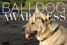 Bali dog awareness. Article on myexoticdream.net