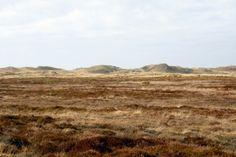 Mitten in den Dünen in #Dänemark.