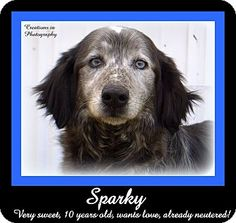 "Meet SPARKY - one of our new group of senior ""farm-dogs"" that arrived at the shelter late last week. Will you please open up your home and your heart to one of these wonderful, older dogs?? They have plenty of love to give!"