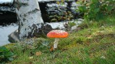 Happy Autumn season to everyone! Aki Jalava