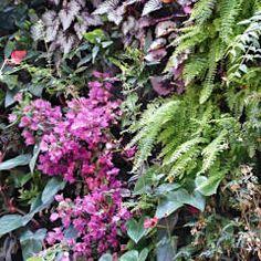 Jardins de inverno tropicais por Vertical Flore