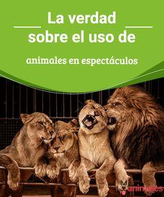 La verdad sobre el uso de animales en espectáculos   El uso de animales en espectáculos se convierte en una práctica cruel que vulnera de muchas formas los animales, les contamos por qué. #animales #espectáculos #curiosidades #crueldad