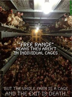 "Free range farming is not a ""humane"" alternative."