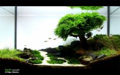 amazing aquascape