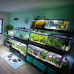 its my happy place. Aquarium Shop, Aquarium Design, Planted Aquarium, Aquarium Fish, Reptile Habitat, Reptile Room, Reptile Cage, Terrarium Reptile, Terrariums