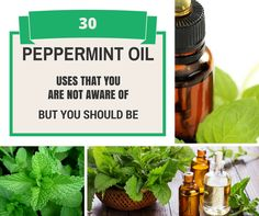 30 Peppermint Oil Uses That You Are NOT Aware Of – But You Should Be