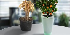 Never Kill a Plant Again: 7 Gadgets to Make You a Gardening Pro