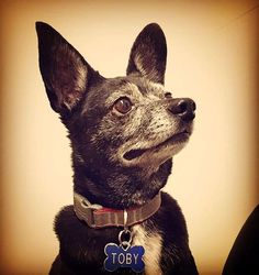Toby the Rocket Dog  Submitted via Facebook by Michilyn Gonzalez  Thanks for sharing this awesome portrait!