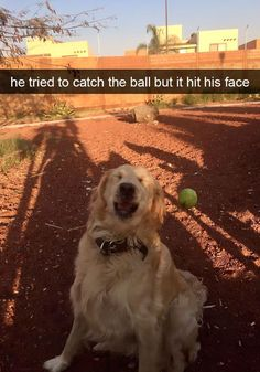 Funny Animal Memes Of The Day – 52 Pics - Lovely Animals World 32 Funny Animals Guaranteed to Make You Laugh This dog got tricked LOL 24 Funny Animal Pictures Of The Da. Funny Animal Jokes, Funny Dog Memes, Cute Funny Animals, Funny Animal Pictures, Funny Cute, Cute Dogs, Funny Puppies, Top Funny, Memes Humor