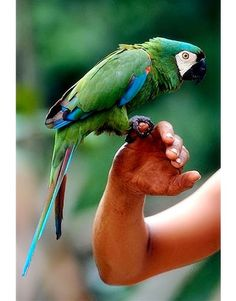 Amazonian alive planet! Brazil-just like my family bird in Brasil named Lordo! Au saudades!