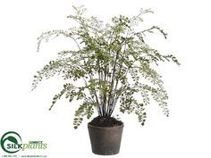 Maidenhair Fern - Green - Pack of 2