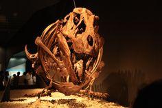T. rex en posture assise à Tokyo