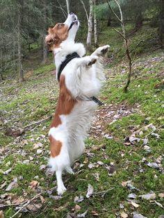 Dancing in the forest! #kooiker Aria