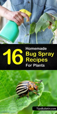 Bugs On Plants: 16 Homemade Bug Spray Recipes For Plants Stop using commercial pesticides on your vegetable garden. Learn how to make your own homemade bug spray for plants using simple ingredients like water and cayenne peppers. Bug Spray For Plants, Garden Bug Spray, Garden Bugs, Garden Insects, Garden Pests, Garden Fertilizers, Garden Care, Natural Bug Killer, Natural Bug Spray