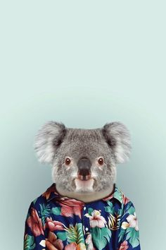 KOALA by Yago Partal. It is a koala in a shirt. But, since I don't have a koala in a shirt board, I am gonna leave this here. Zoo Animals, Funny Animals, Cute Animals, Funny Koala, Wild Animals, Zoo Book, Iphone 6 Wallpaper, Wallpaper Ideas, Pet Day