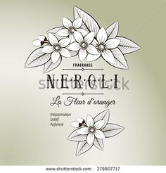 Vintage cosmetic label with flowers, buds and leaves of orange. Black and white composition with neroli. Line art, graphic. Vector illustration for use in web design, print or other visual area. - stock vector