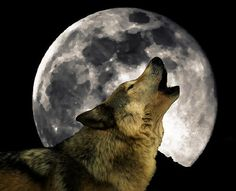 pictures of the moon | The full moon in January is often called the Wolf Moon. Here is an ...