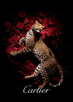 Ali Mahdavi Photography - ADVERTISING | Cartier
