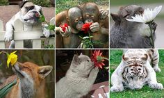 Dogs, bunnies and a TIGER sniff spring flowers in photos guaranteed to make you smile | Daily Mail Online