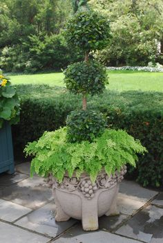 triple ball brush cherry topiary, and maidenhair ferns