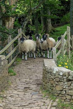 Sheep taking a stroll in Swaledale, Yorkshire(via Pinterest: Discover and save creative ideas)