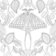 Millie Marotta Tropical Wonderland Moth Coloring