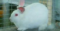 Pesquisa Como preparar uma gaiola de coelho. Vistas 7244.