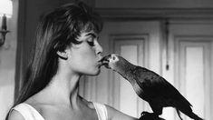 En 1956, dans Cette sacrée gamine de Michel Boisrond, Brigitte Bardot joue Brigitte Latour une jeune fille faussement sage qui ne cherche qu'à se dévergonder.