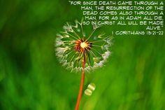1 Corinthians 15:21-22