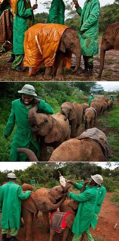 Orphan elephant sanctuary in Kenya