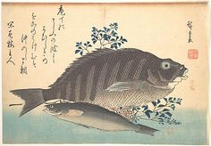 Shimadai and Ainame Fish, from the series Uozukushi (Every Variety of Fish)  Andô Hiroshige  (Japanese, 1797–1858)  Period: Edo period (1615–1868) Date: 1840s Culture: Japan Medium: Polychrome woodblock print; ink and color on paper