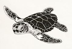 17 Awesome how to draw a simple sea turtle images Animal Drawings, Pencil Drawings, Sea Turtle Art, Sea Turtles, Sea Turtle Pictures, Turtle Silhouette, Sea Drawing, Gravure Illustration, Surfboard