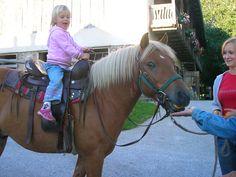 Kinderreiten beim Landhotel Spreitzhofer. Horses, Animals, Kids Animals, Animais, Animales, Animaux, Animal Books, Horse, Animal