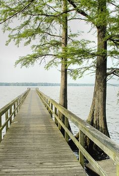 Though this reminds me of Table Rock Lake, it is actually in Reelfoot Lake, TN...love the long dock in this magnificent photo!