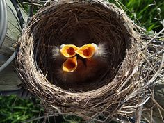 Your Funky Nest Could Win a Prize—Submit by July 15