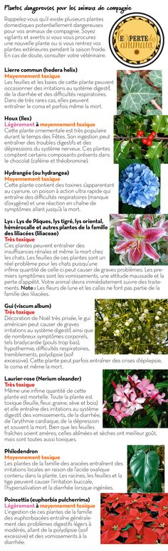 Plantes dangereuses pour les animaux de compagnie Education Canine, Animals And Pets, Dog Food Recipes, Niches, Maya, Marketing, People, Pets, Doggies