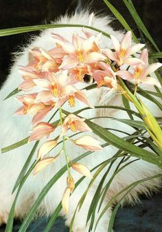 Stephen Eichhorn: Cats and Plants - AnOther Happy Monday