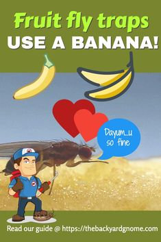 There are many ways to deal with fruit flies. Read about this one and more in our guide! Fruit Flies, Fly Traps, Gone For Good, How To Get Rid, Reading, Reading Books