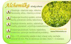 Info alchemilka