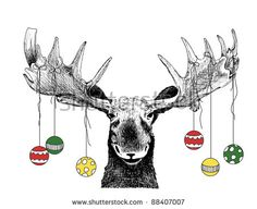 funny Christmas card moose design of hand drawn winter scene of big animal face, cute humorous Christmas tree ornaments or decorations hanging on antlers, vector illustration, fun happy humor sketch