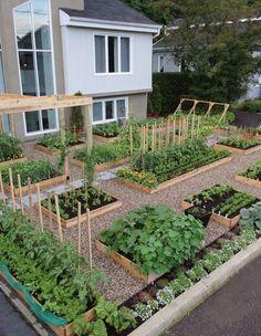 Raised garden bed inspiration